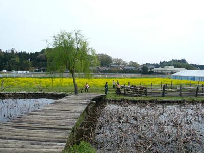 【ランチ】つくば・蕎舎(そばや) お店の前ののどかな風景