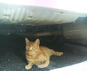 東京丸の内の野良猫