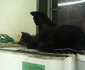東京駅の猫たち