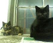 東京駅の猫たち2
