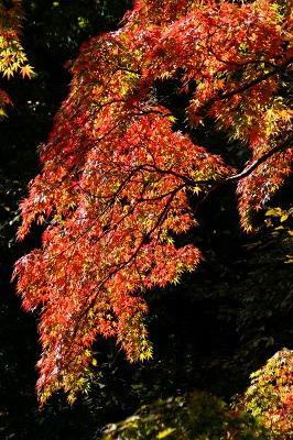軽井沢_雲場池の紅葉