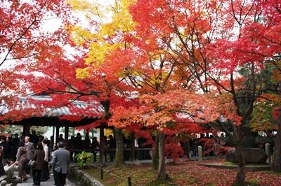 【'08 京都紅葉の旅】東山・東福寺 通天橋の紅葉