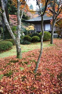 大原・三千院 青苔と落葉のコントラスト