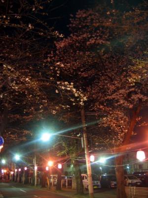 日本の道100選『五香・さくら通り』