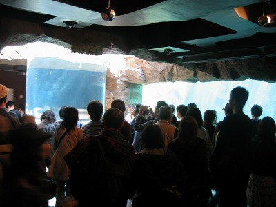 旭山動物園あざらし館の館内