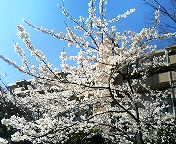 image/twingo-toku-2006-04-03T18:48:10-1.jpg